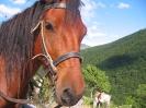 konj_2